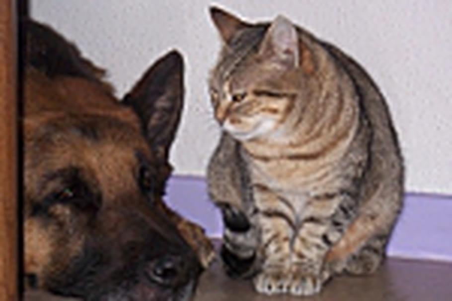 Les chiens ont un cerveau plus gros parce qu'ils sont plus sociables que les chats