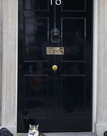 Larry, le grand ami de David Cameron