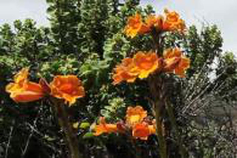 Le désert d'Atacama, un vrai jardin fleuri