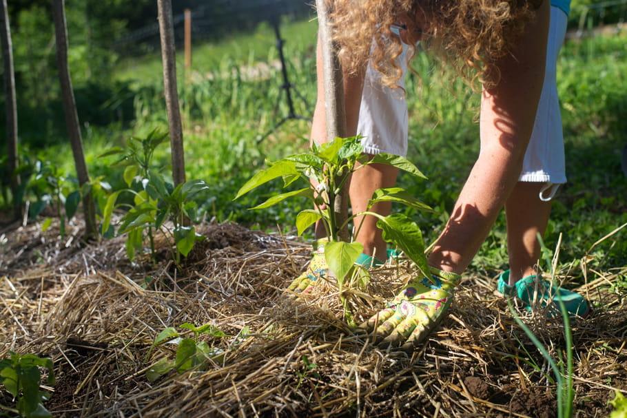 Jardin biologique: les bons gestes pour un jardin écologique