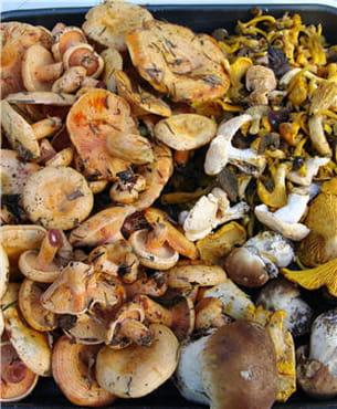 variez les champignons et les bénéfices !