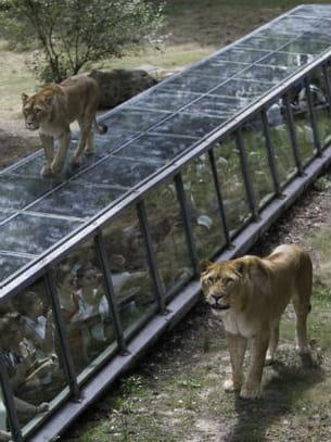 Thoiry zoo tarif for Zoo en yvelines