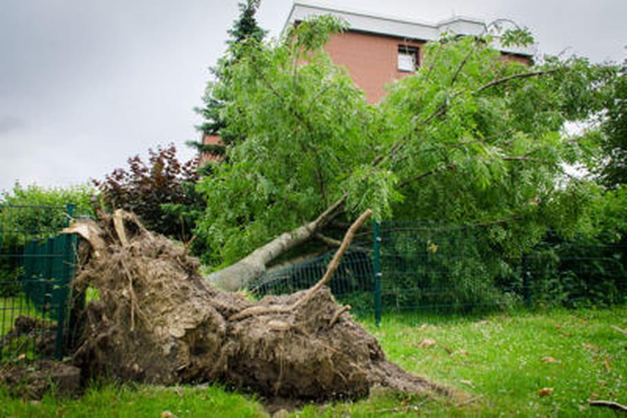 Comment faire mourir un arbre ?