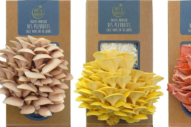 Kit à champignons de Prêt à Pousser