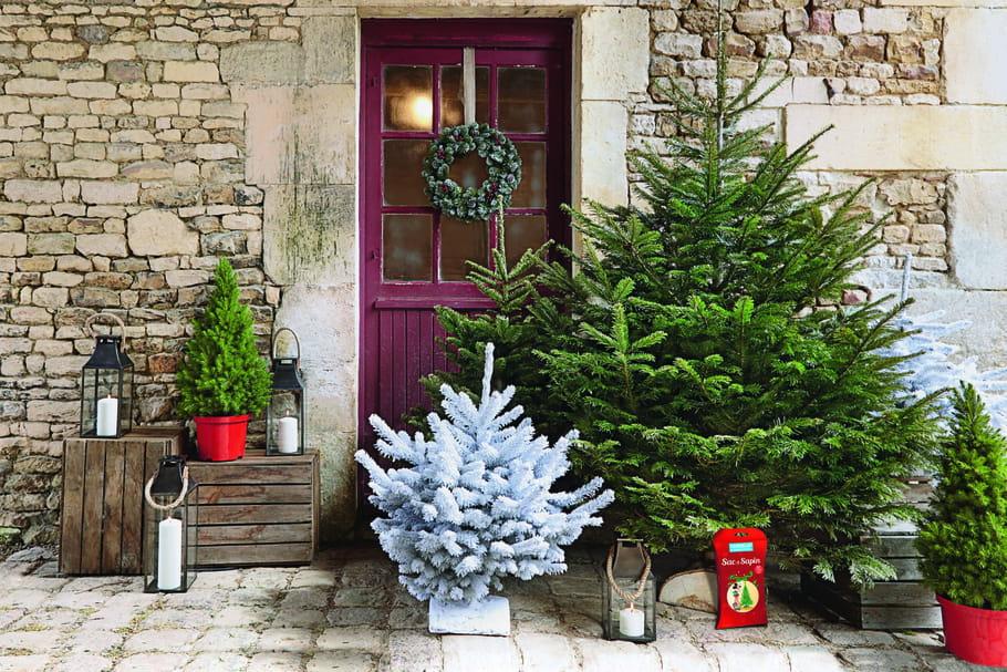 Choisir son sapin de Noël naturel