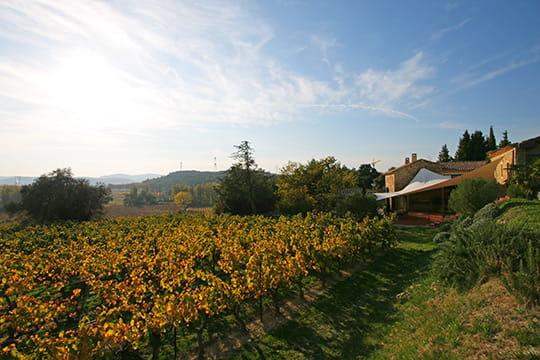 Déco écarlate entre les vignes provençales