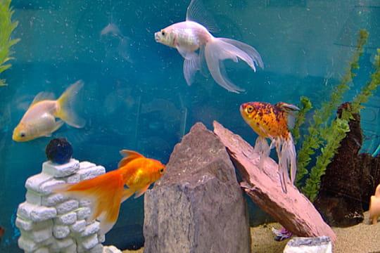 Trois poissons