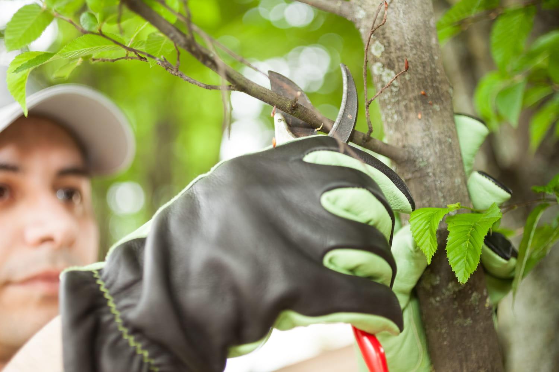 Comment émonder un arbre?