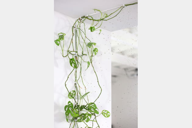 Une plante grimpante