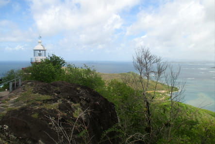 Randonnée sur la Presqu'île de la Caravelle