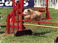 world dog show chien