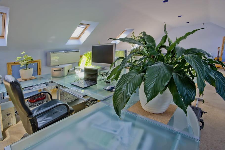 ces plantes d 39 int rieur qui supportent l 39 obscurit. Black Bedroom Furniture Sets. Home Design Ideas
