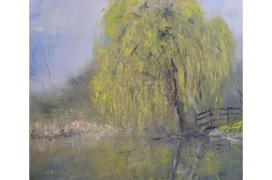 Le saule près de l'étang