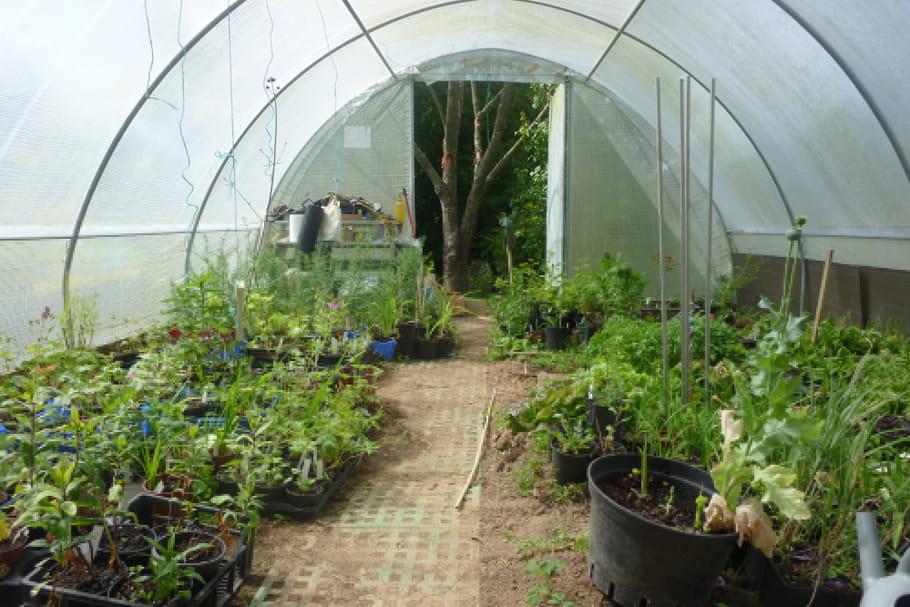 Serre de jardin : choix de l\'emplacement et entretien