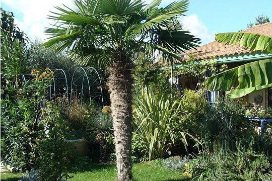 un palmier au coeur du jardin. Black Bedroom Furniture Sets. Home Design Ideas