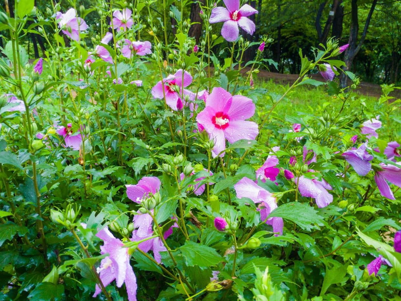 Plante Couvre Sol Soleil plante vivace : définition, liste de vivaces pour ombre