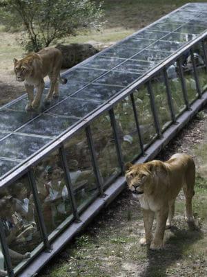 Le zoo de thoiry for Jardin 5 thoiry