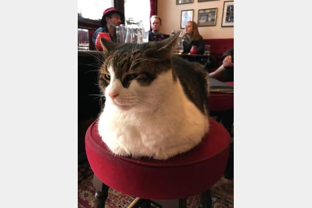 Lenny Cat(vitz)