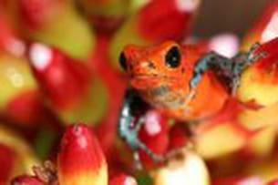 des animaux hauts en couleurs