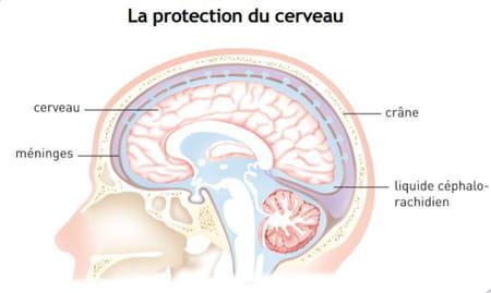 Schéma du cerveau
