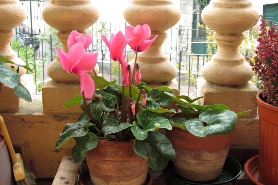 Fleurir son balcon en hiver