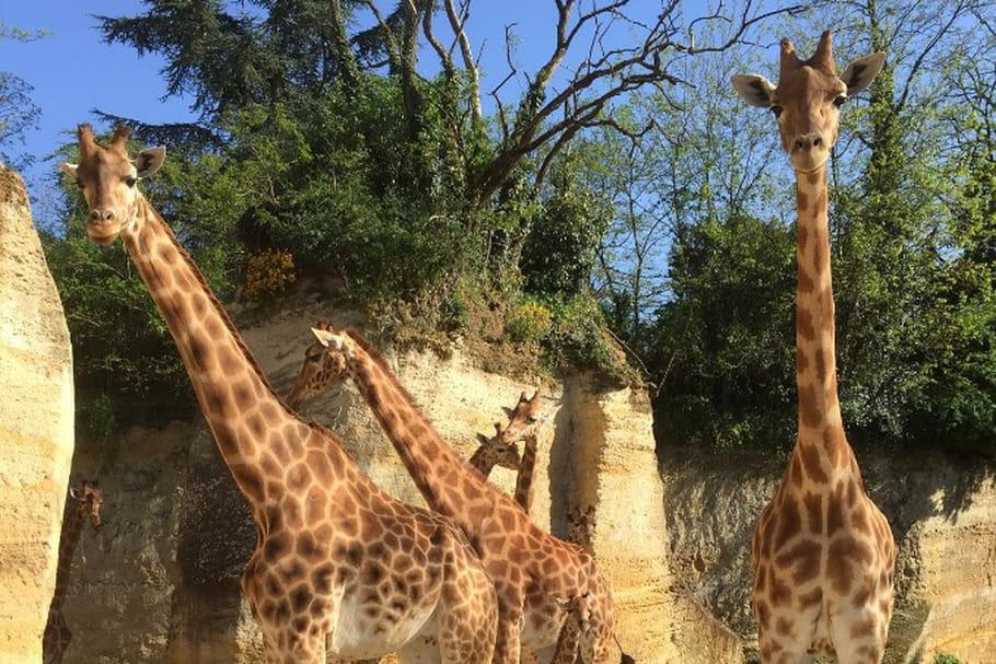 Bioparc de Doué-la-Fontaine : en immersion avec les animaux sauvages