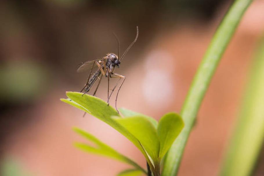 Zika : le lien entre les microcéphalies et les pesticides est une rumeur