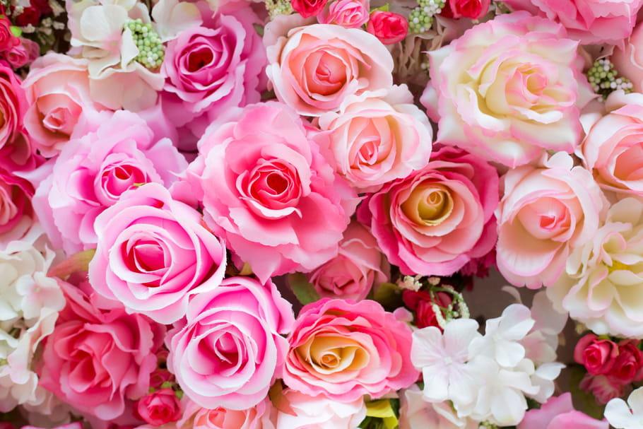 Comment avoir de belles roses?