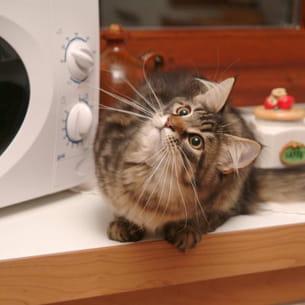 attention à votre chat quand il est dans la cuisine.