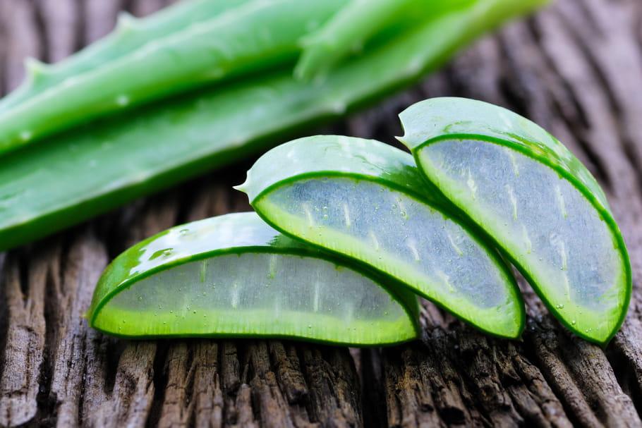 Aloe vera: bienfaits, danger, utilisation santé, peau, visage...