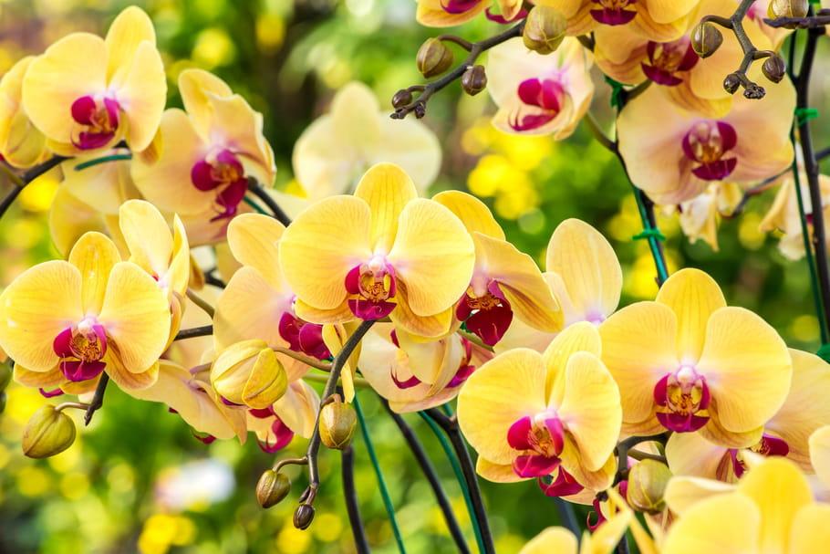 orchid e comment s 39 en occuper. Black Bedroom Furniture Sets. Home Design Ideas