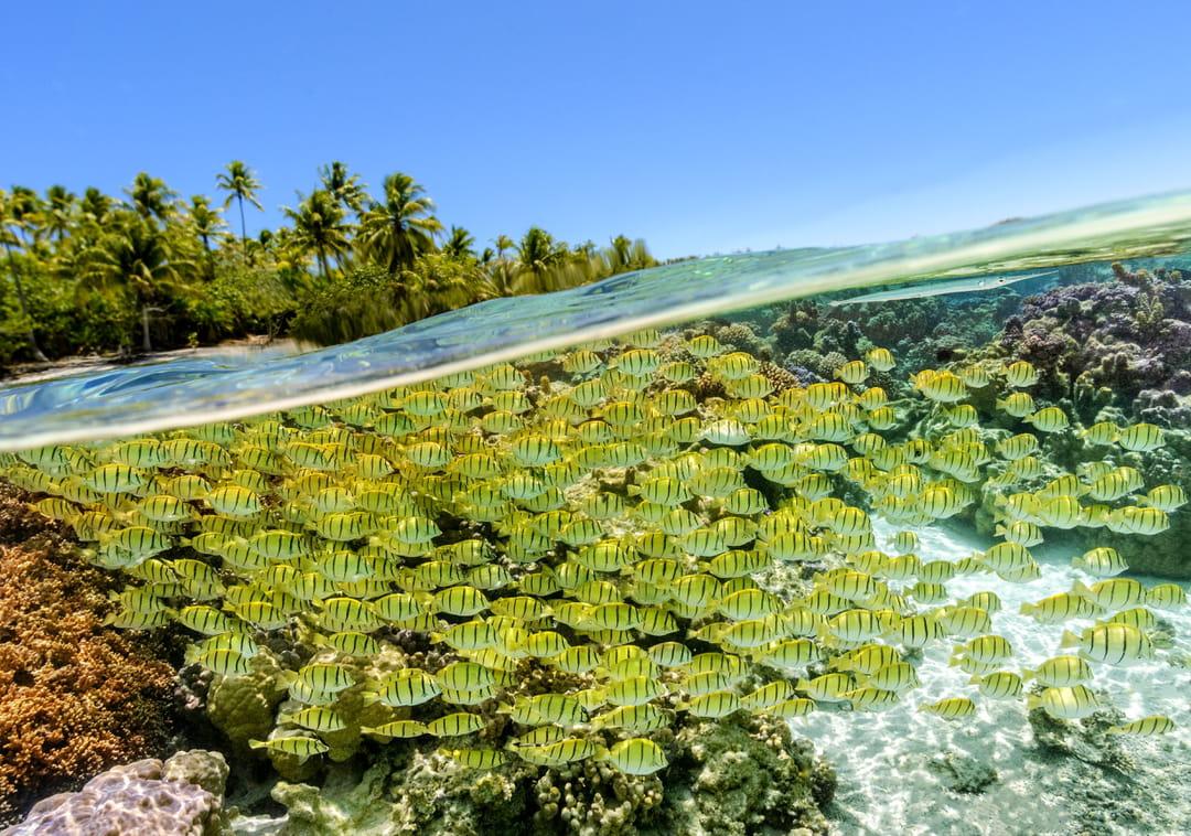 poissons-tahiti-plage