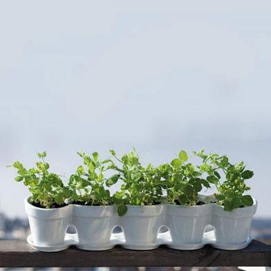 Jardini re miniature for Acheter des plantes par internet