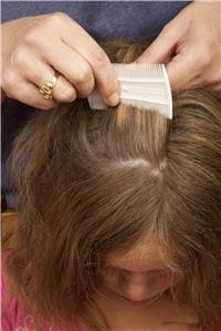le peigne est utile en complément d'un traitement classique.