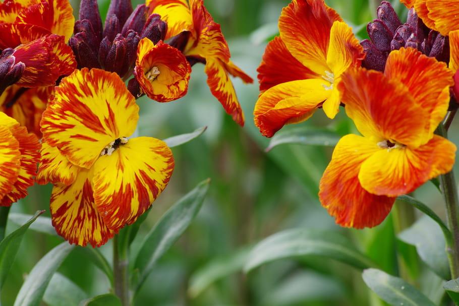 Floraison en mai
