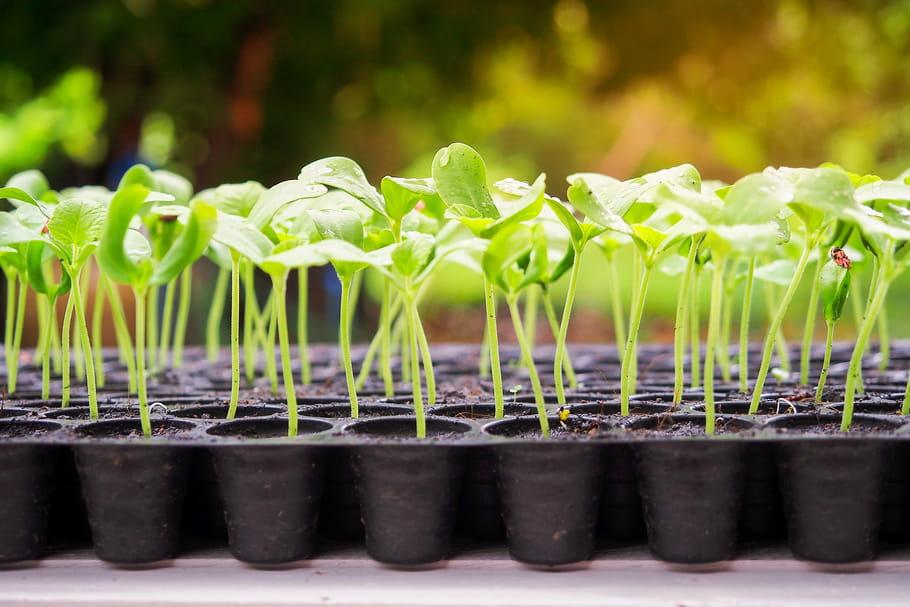 Semis: comment bien semer les graines des plantes?