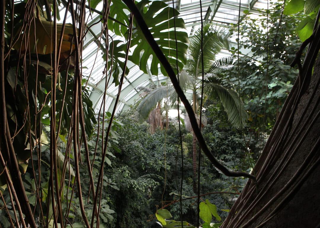 jardin-exotique-paris-grandes-serres-du-jardin-des-plantes