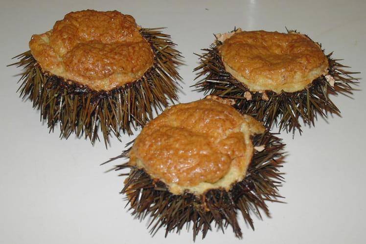 Oursins soufflés