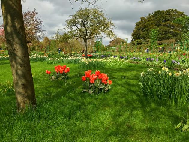 Tulipes et narcisses font la paire