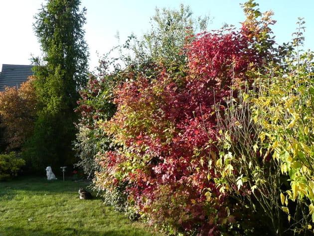 Les couleurs d 39 automne au jardin for Au jardin des couleurs
