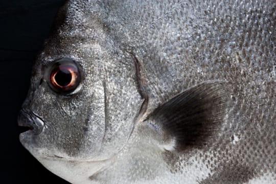 Big fish par Claudia Uribe Touri
