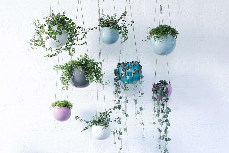 Suspension Pour Plantes D Intérieur 10 plantes d'intérieur à suspendre