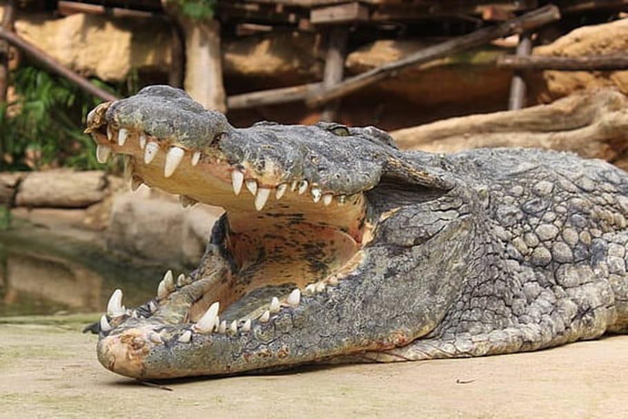 Ferme aux crocodiles de Pierrelatte: bienvenue au pays des crocos!