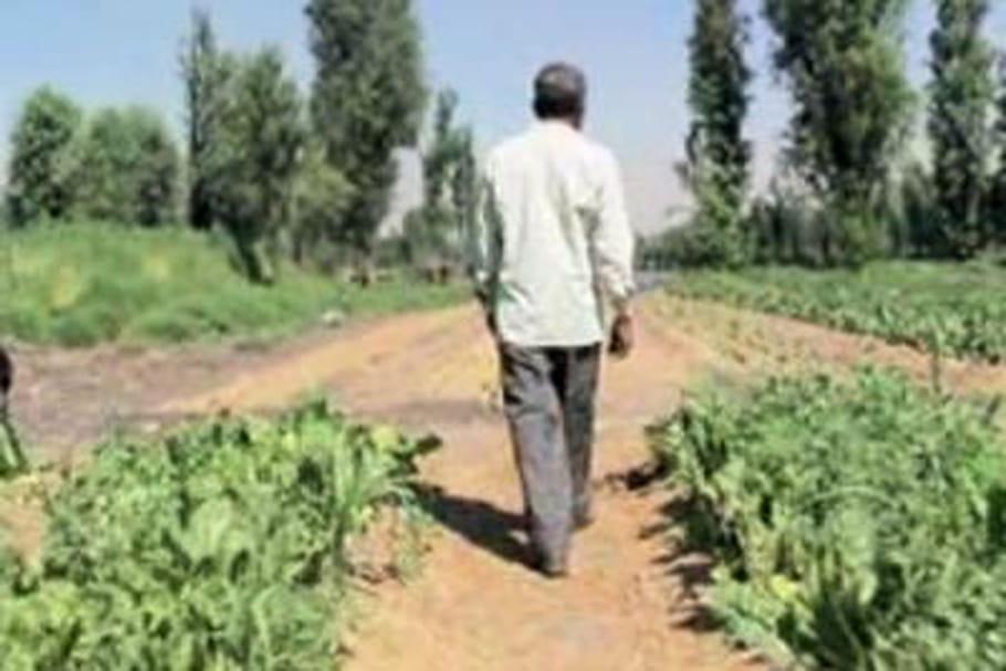 L'agriculture pré-hispanique a la cote à Mexico