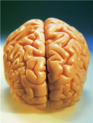 plus on apprend, plus nos cellules nerveuses réalisent des connexions entre