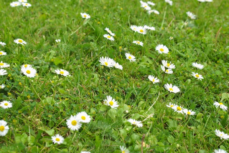 Dans la pelouse