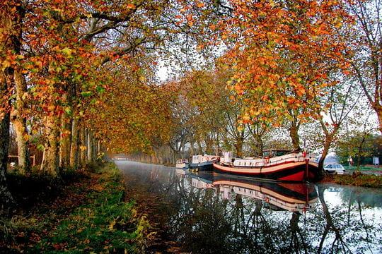 Couleurs d'automne à Portiragnes