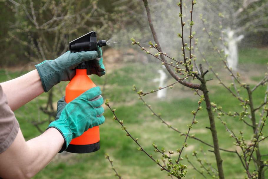 Insecticide naturel: ces recettes simples à fabriquer maison