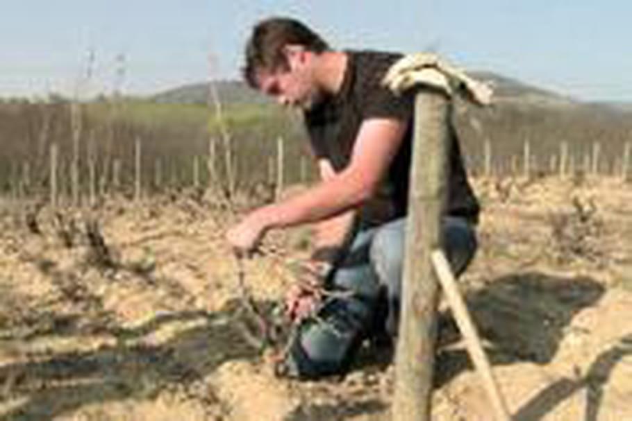 Beaujolais cherche jeunes viticulteurs