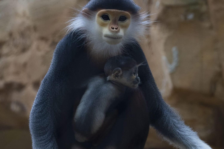 Le Zoo de Beauvalet ses hôtels ouvrent ce 25mai